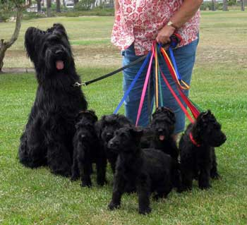 Finding Your Briard